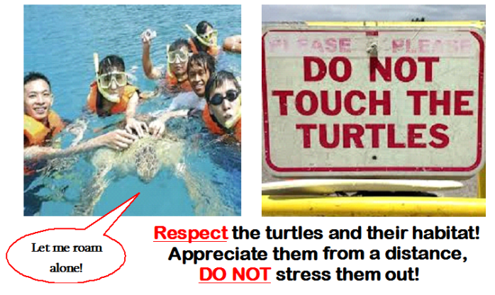 No Touching Turtles